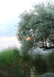 Tectona - Morgane Le Gall
