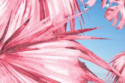 Piper Rosé sauvage - Morgane Le Gall
